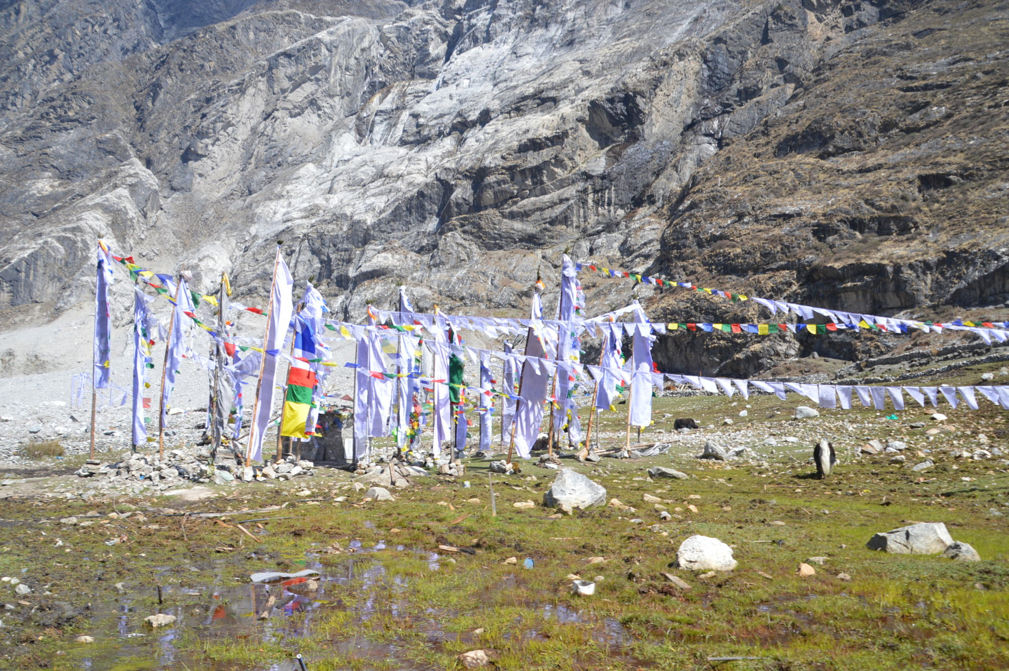 Prayer Flags along the Langtang Valley