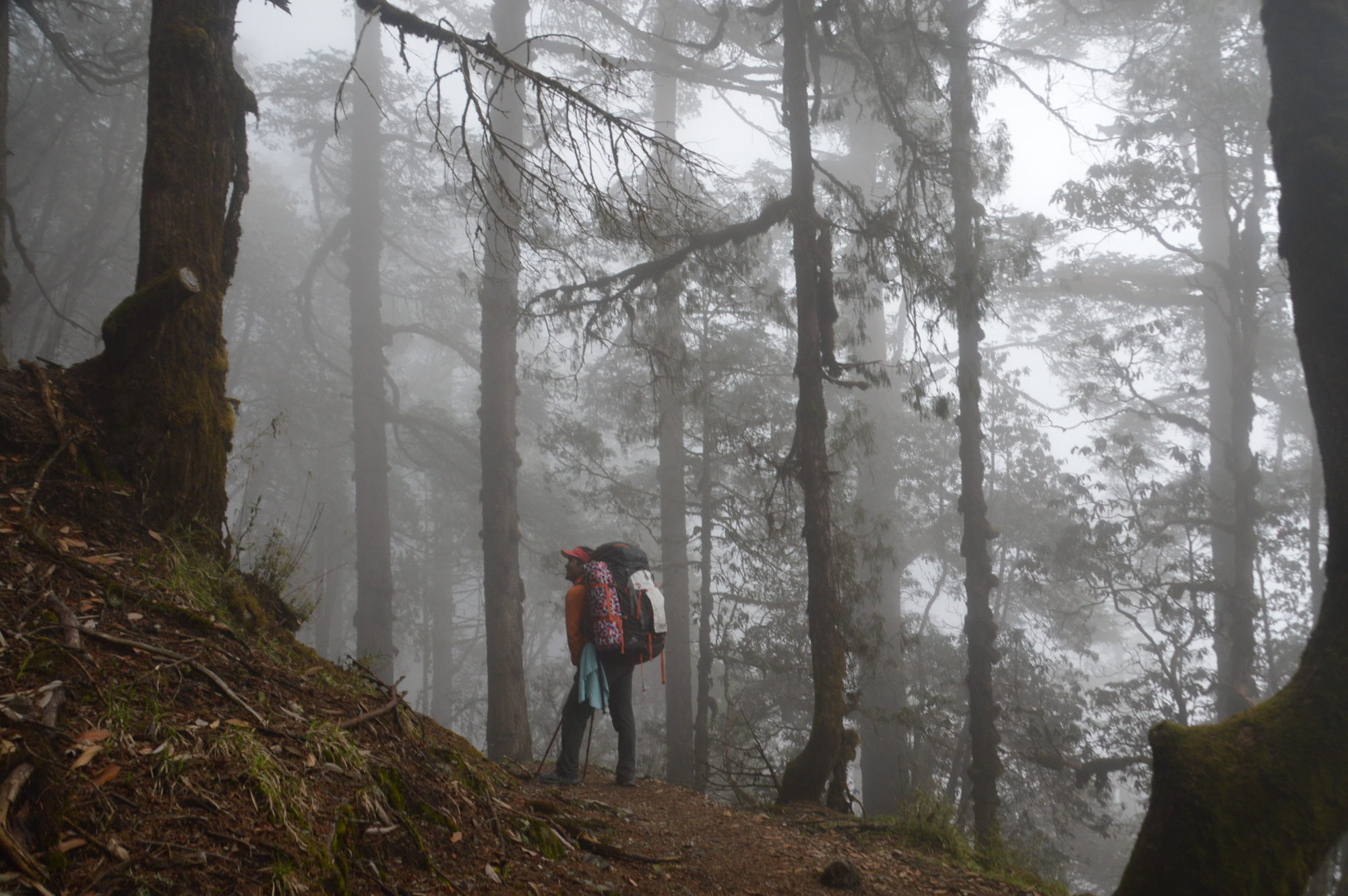 Hiker in the forest along the Langtang Trek