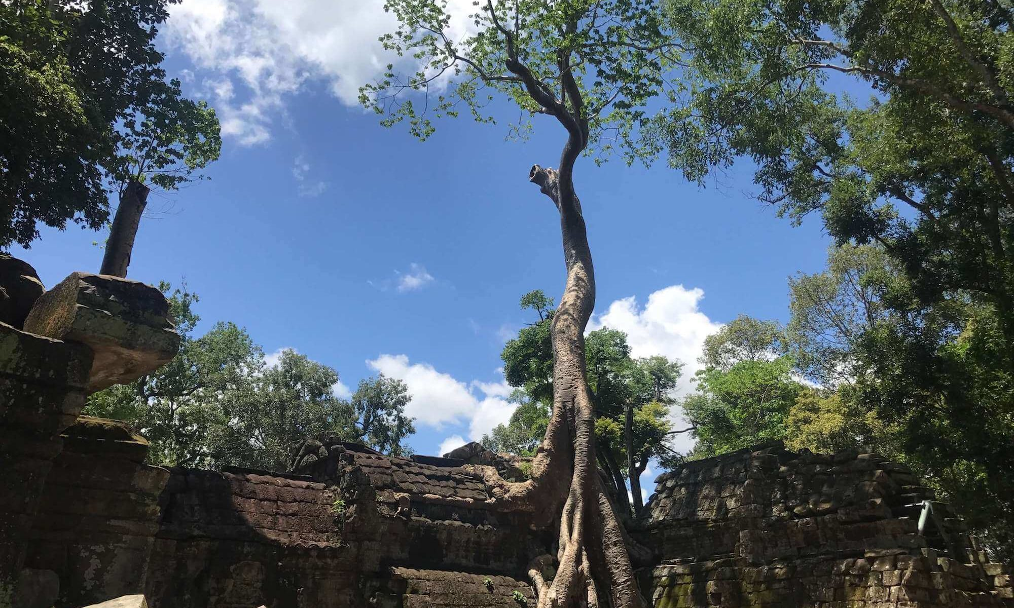 Cambodia Itinerary Ta Prohm