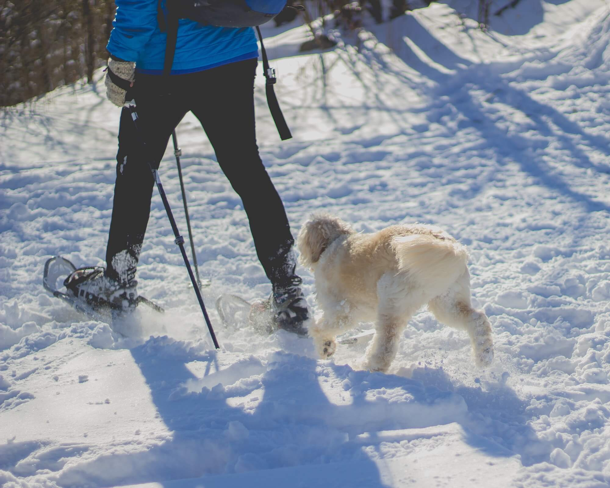 Person snowshoes with dog